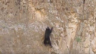 Алпинист засне уникални кадри докато беше  в планината. Вижте сами какво засне камерата