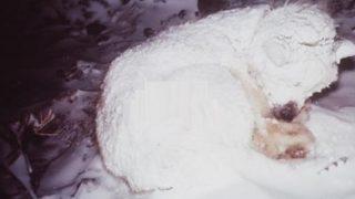 Помагайки на замръзнало куче, хората с голяма изненада виждат какво крие под себе си