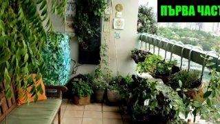 Зеленчукова градина на терасата – Първа част
