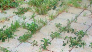 Градинарски трик за махане на плевели завинаги