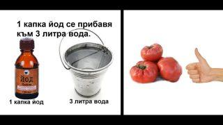 Рецепта за здрави домати, забравих за болестите