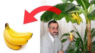 Градинар: Отглеждане на Банан
