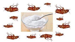 Махнете хлебарките завинаги с този метод!