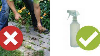 Спрете да скубете плевелите, ето лесен метод!