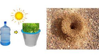 Градинар: Прогонете мравките от градината си с тази рецепта