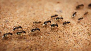 Рецепта за прогонване на мравки