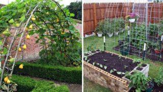 Полезни съвети за нов вид на градината