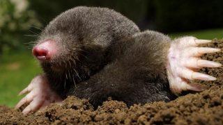 Вижте статията, ако познавате това животно! Интересно!