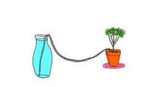 Виж как да напоявате растенията, докато сте на почивка!