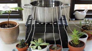 Успешен метод за напояване на стайните растения, докато ви няма! Вижте го!