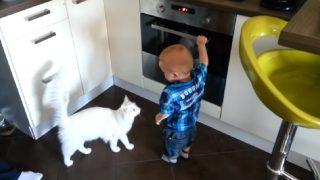 Бебето пусна фурната без да иска и реши да я отвори, но Вижте какво направи Котката