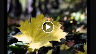 Всеки който помни песента Шуми, шуми, Яворе нека да се чувства поздравен