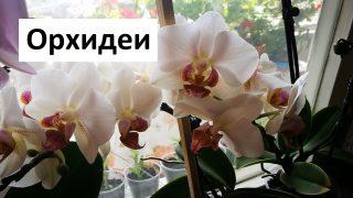 Практически съвети за Отглеждане на Орхидеи