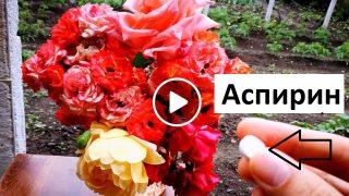 Градинар споделя как цветята във вазата да издържат по-дълго време