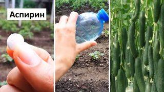 Аспирин в градината носи повече ползи от колкото си мислят много Градинари
