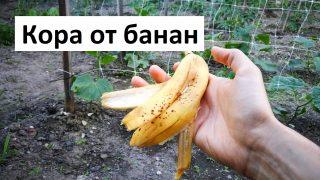 Кора от банан в градината
