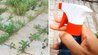 Махането на досадните плевели вече става много по – лесно с тези методи