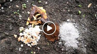 Градинар споделя 4 метода за подхранване на почвата