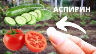 Рецепти за използване на Аспирин в градината