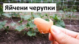 Яйчени черупки в градината