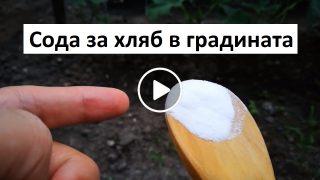 Ето как можете да използвате Сода за хляб в градината