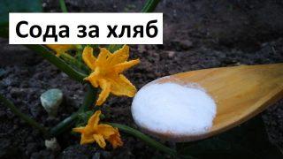 Градинар използа Сода за хляб в градината и споделя 5 метода с нас