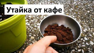 Градинар споделя защо използва Утайка от кафе