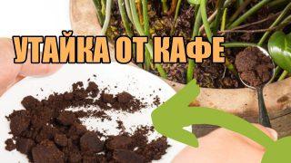 Всеки който пие Кафе може да използва утайката от кафе за да подхрани почвата на растенията си