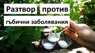 Градинар споделя разтвор против гъбични заболявания за цветя, зеленчуци и асма!