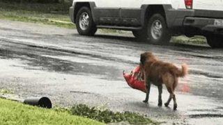 Куче даде втори шанс за живот на бебе