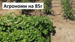 Агрономи показват градината си и споделят своя опит!